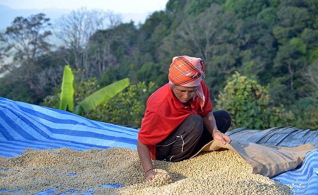 Thaiföldi kávé